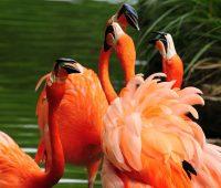 Imágenes de aves exóticas