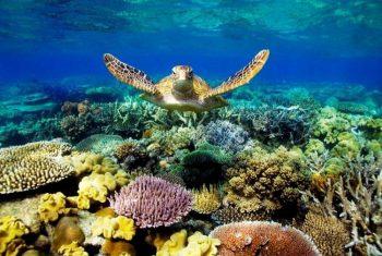 El arrecife más inmenso del mundo