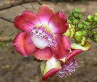 Plantas exóticas de panamá