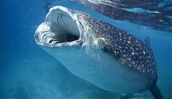 Tiburones y otras amenazas marinas