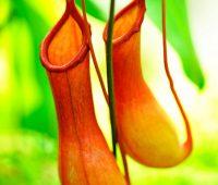 Plantas exóticas del mundo