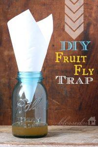 Trampa para moscas de compost