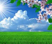 Paisajes de flores de primavera