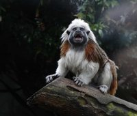 Imágenes de los 5 animales más raros