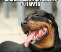 Imágenes de memes de memes de perros